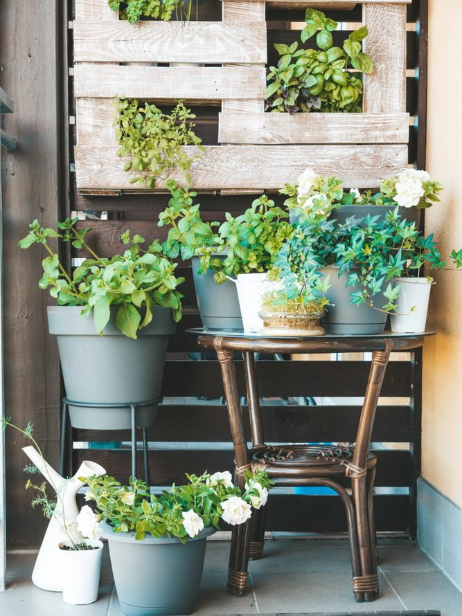 Sparking Joy How To Bring Hygge To Your Garden by Fashion Du Jour LDN. Grow your own fruits. Garden