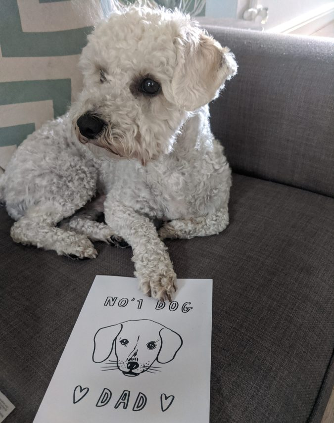 Father's Day 2020 How To Celebrate Whether Near Or Far by Fashion Du Jour LDN. White Poochon puppy with Fathers Day Card saying No. 1 Dog Dad